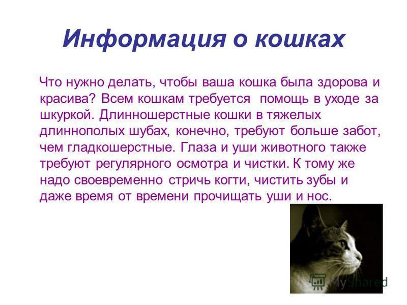 Информация о кошках Что нужно делать, чтобы ваша кошка была здорова и красива? Всем кошкам требуется помощь в уходе за шкуркой. Длинношерстные кошки в тяжелых длиннополых шубах, конечно, требуют больше забот, чем гладкошерстные. Глаза и уши животного