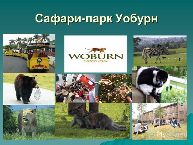 Сафари-парк Уобурн