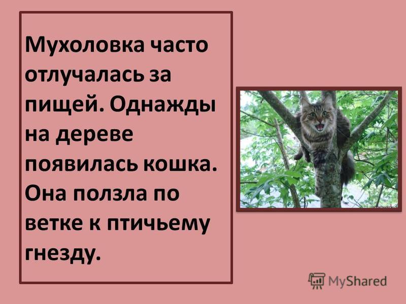 Мухоловка часто отлучалась за пищей. Однажды на дереве появилась кошка. Она ползла по ветке к птичьему гнезду.