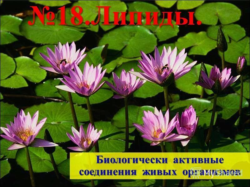 Биологически активные соединения живых организмов 18.Липиды.