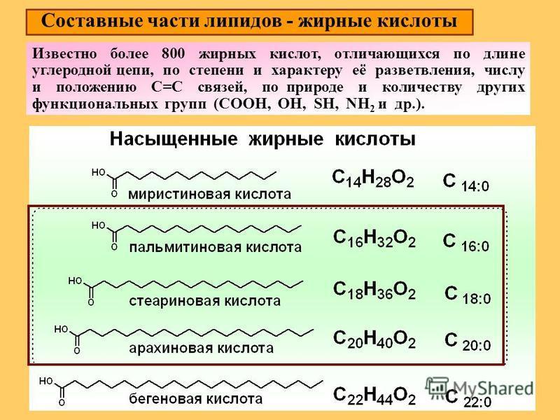 Составные части липидов - жирные кислоты Известно более 800 жирных кислот, отличающихся по длине углеродной цепи, по степени и характеру её разветвления, числу и положению С=С связей, по природе и количеству других функциональных групп (COOH, OH, SH,