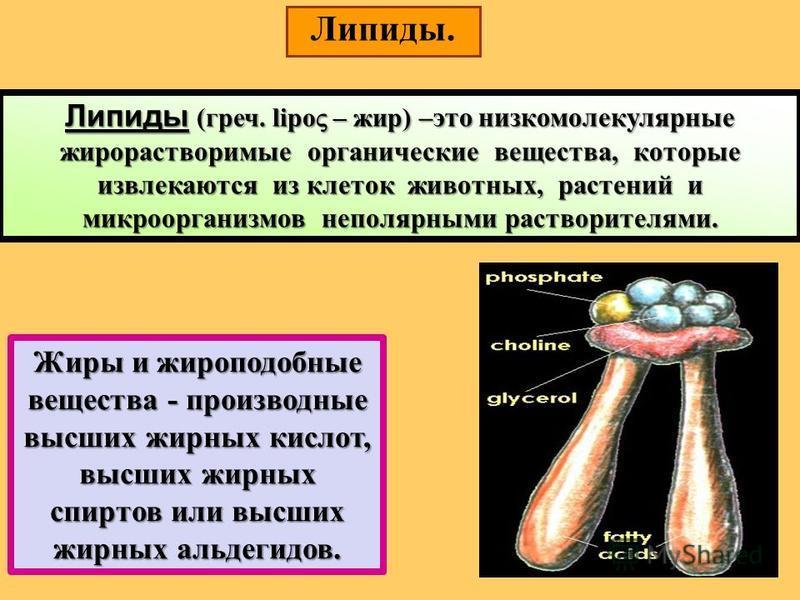 Липиды. Липиды (греч. lipo – жир) –это низкомолекулярные жирорастворимые органические вещества, которые извлекаются из клеток животных, растений и микроорганизмов неполярными растворителями. Жиры и жироподобные вещества - производные высших жирных ки