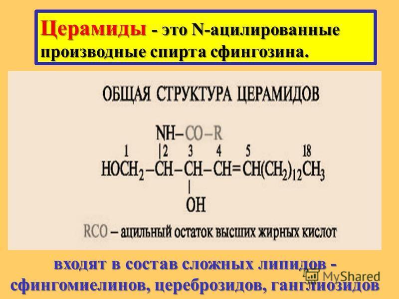 Церамиды - это N-ацилированные производные спирта сфингозина. входят в состав сложных липидов - сфингомиелинов, цереброзидов, ганглиозидов