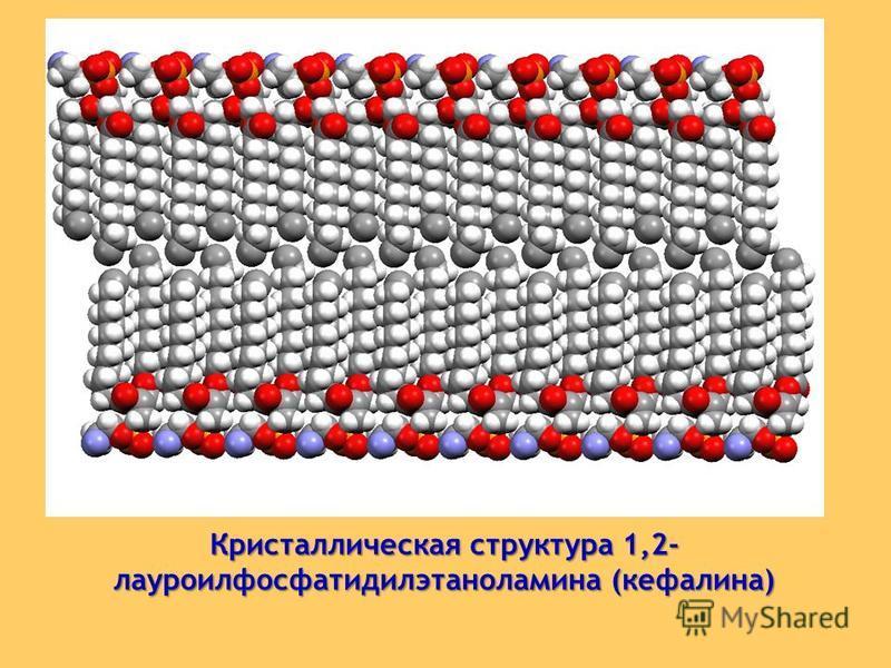 Кристаллическая структура 1,2- лауроилфосфатидилэтаноламина (кефалина)