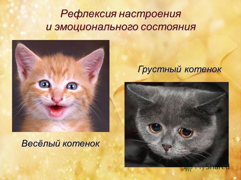 Весёлый котенок Грустный котенок Рефлексия настроения и эмоционального состояния