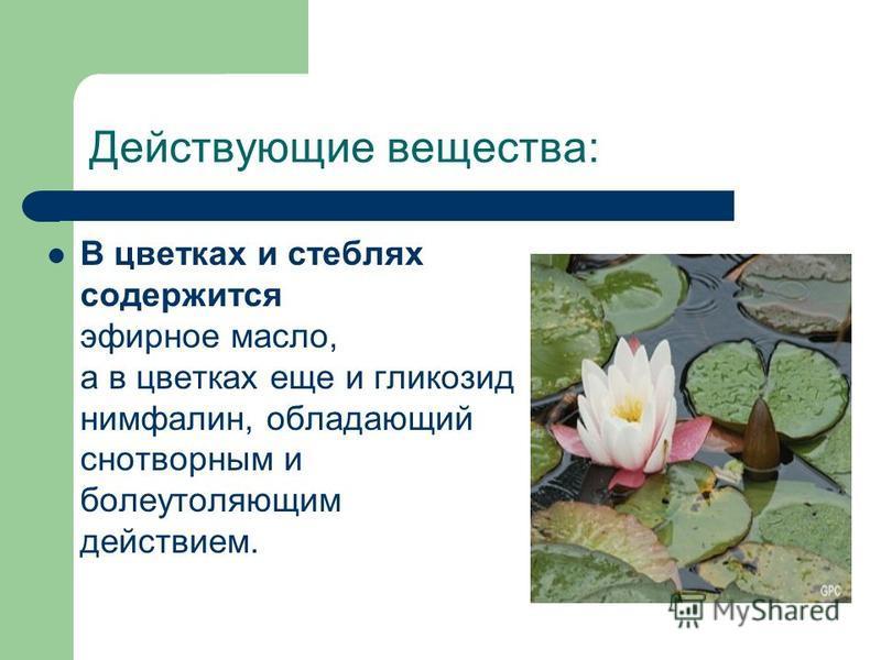 Действующие вещества: В цветках и стеблях содержится эфирное масло, а в цветках еще и гликозид нимфалин, обладающий снотворным и болеутоляющим действием.