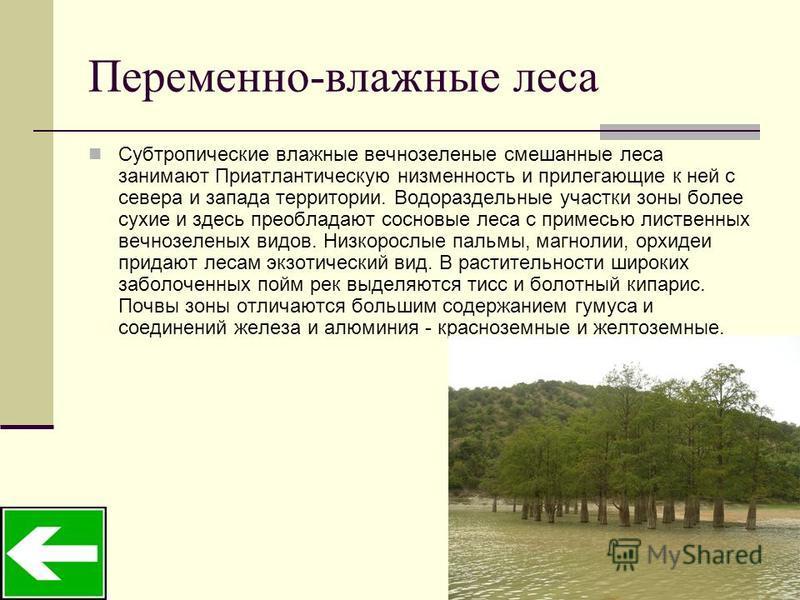 Переменно-влажные леса Субтропические влажные вечнозеленые смешанные леса занимают Приатлантическую низменность и прилегающие к ней с севера и запада территории. Водораздельные участки зоны более сухие и здесь преобладают сосновые леса с примесью лис