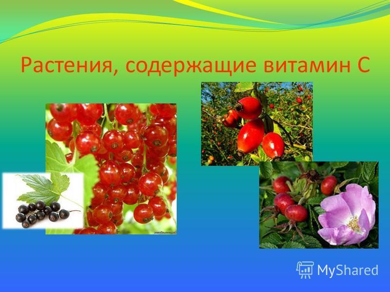 Растения, содержащие витамин С