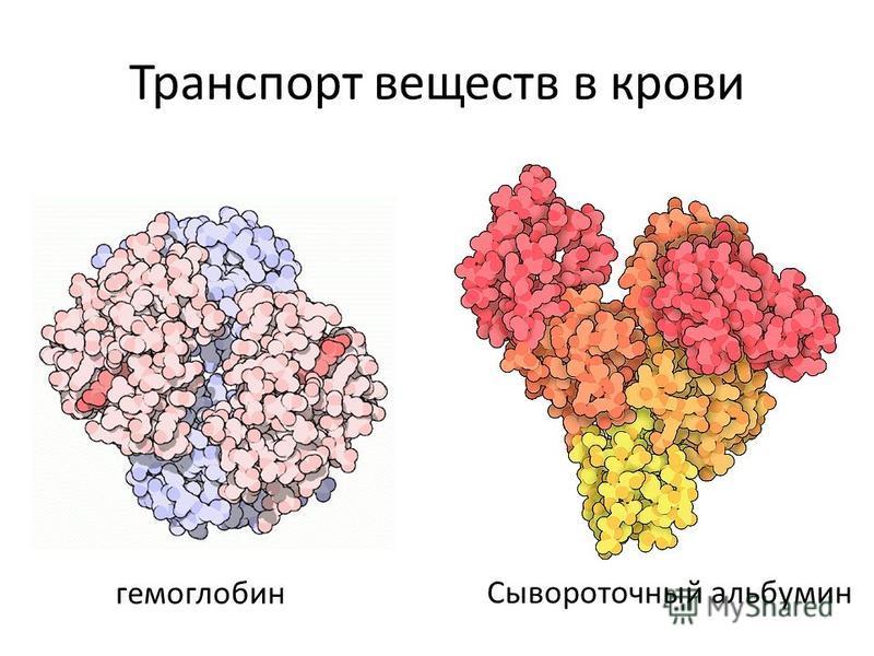 Транспорт веществ в крови гемоглобин Сывороточный альбумин
