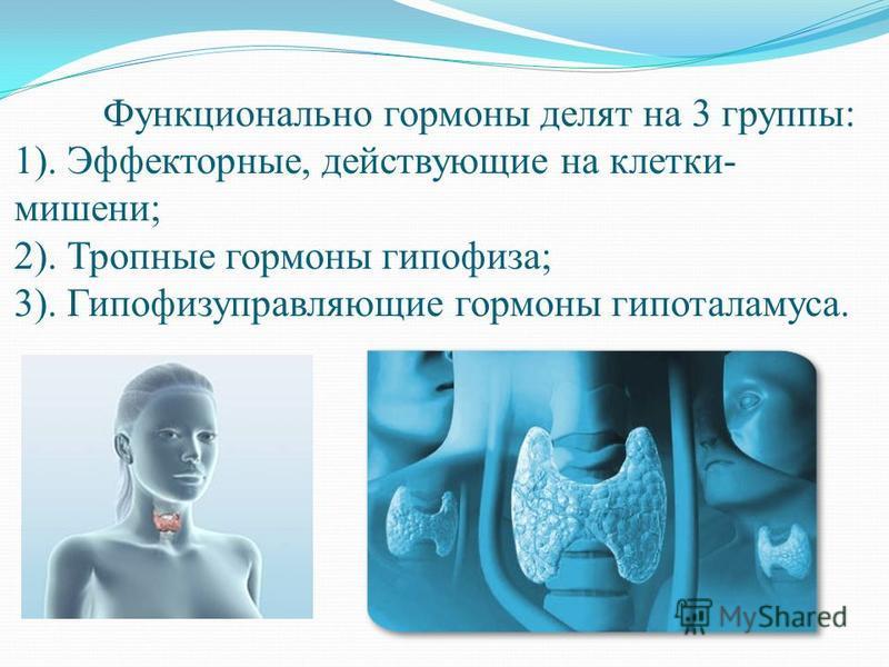 Функционально гормоны делят на 3 группы: 1). Эффекторные, действующие на клетки- мишени; 2). Тропные гормоны гипофиза; 3). Гипофизуправляющие гормоны гипоталамуса.