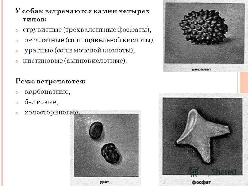 У собак встречаются камни четырех типов: o струвитные (трехвалентные фосфаты), o оксалатные (соли щавелевой кислоты), o уратные (соли мочевой кислоты), o цистиновые (аминокислотные). Реже встречаются: o карбонатные, o белковые, o холестериновые.