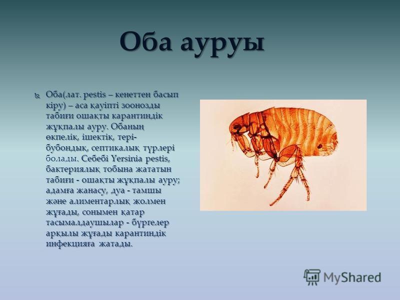Оба(лат. pestіs – кенеттен басып кіру) – аса қауіпті зоонозды табиғи ошақты карантиндік жұқпалы ауру. Обаның өкпелік, ішектік, тері- бубондық, септикалық түрлері. Себебі Үеrsіnіа реstіs, бактериялық тобына жататын табиғи - ошақты жұқпалы ауру; адамға