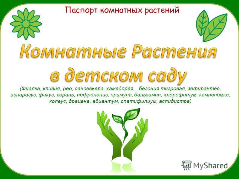 Паспорт комнатных растений (Фиалка, кливия, рио, сансевьера, хамедорея, бегония тигровая, зефирантес, аспарагус, фикус, герань, нефролепис, примула, бальзамин, хлорофитум, камнеломка, колеус, драцена, адиантум, спатифилиум, аспидистра)