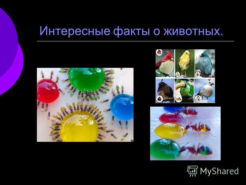 Интересные факты о животных.