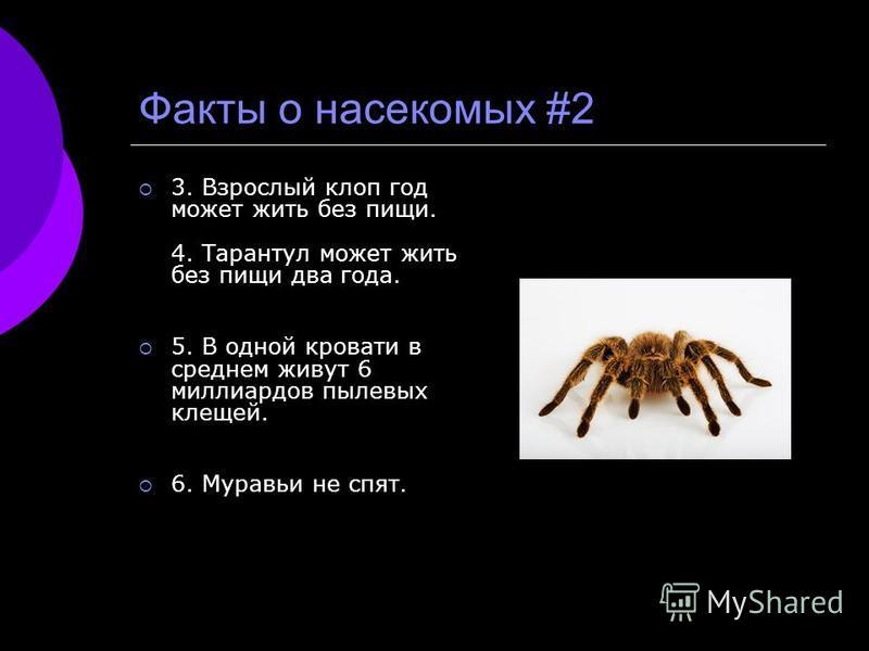 Факты о насекомых #2 3. Взрослый клоп год может жить без пищи. 4. Тарантул может жить без пищи два года. 5. В одной кровати в среднем живут 6 миллиардов пылевых клещей. 6. Муравьи не спят.