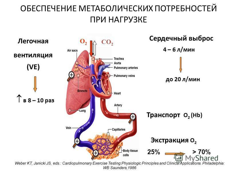 ОБЕСПЕЧЕНИЕ МЕТАБОЛИЧЕСКИХ ПОТРЕБНОСТЕЙ ПРИ НАГРУЗКЕ O2O2 СO2СO2 Легочная вентиляция (VE) в 8 – 10 раз Сердечный выброс Экстракция O 2 Транспорт O 2 (Hb) 4 – 6 л/мин до 20 л/мин 25%> 70% Weber KT, Janicki JS, eds.: Cardiopulmonary Exercise Testing:Ph