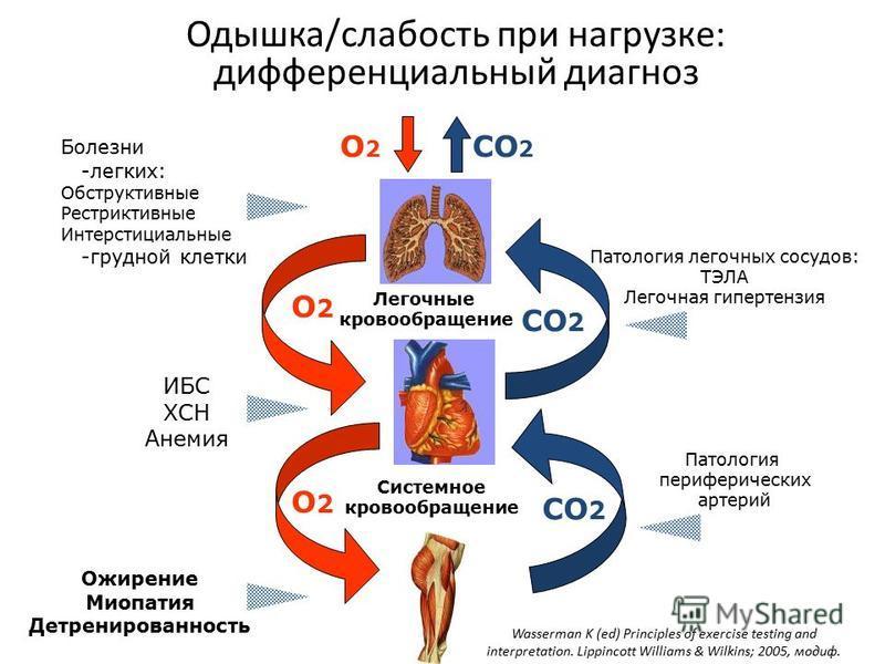 Одышка/слабость при нагрузке: дифференциальный диагноз CO 2 O2O2 O2O2 O2O2 Легочные кровообращение Системное кровообращение Болезни -легких: Обструктивные Рестриктивные Интерстициальные -грудной клетки Патология легочных сосудов: ТЭЛА Легочная гиперт