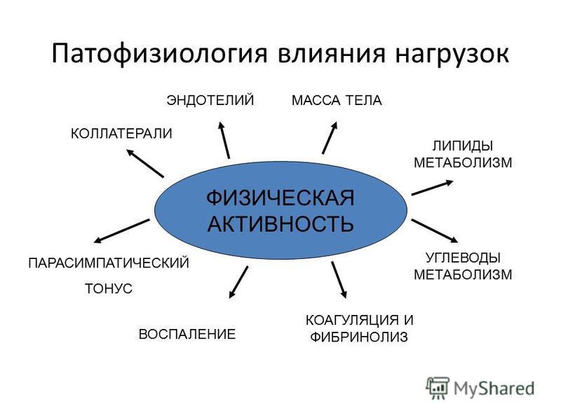 Патофизиология влияния нагрузок ФИЗИЧЕСКАЯ АКТИВНОСТЬ КОЛЛАТЕРАЛИ ЭНДОТЕЛИЙМАССА ТЕЛА КОАГУЛЯЦИЯ И ФИБРИНОЛИЗ ВОСПАЛЕНИЕ ПАРАСИМПАТИЧЕСКИЙ ТОНУС ЛИПИДЫ МЕТАБОЛИЗМ УГЛЕВОДЫ МЕТАБОЛИЗМ