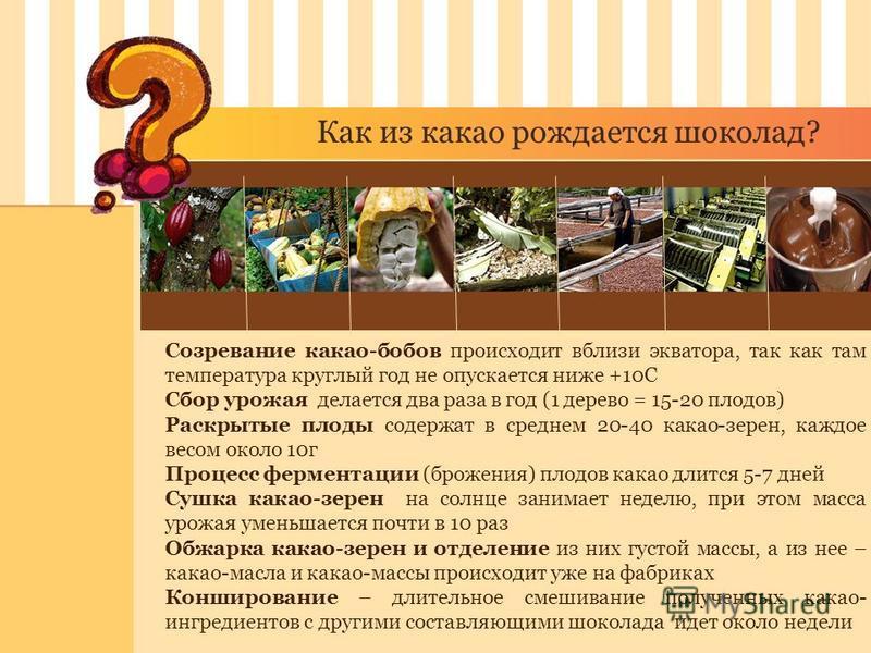 Как из какао рождается шоколад? Созревание какао-бобов происходит вблизи экватора, так как там температура круглый год не опускается ниже +10С Сбор урожая делается два раза в год (1 дерево = 15-20 плодов) Раскрытые плоды содержат в среднем 20-40 кака