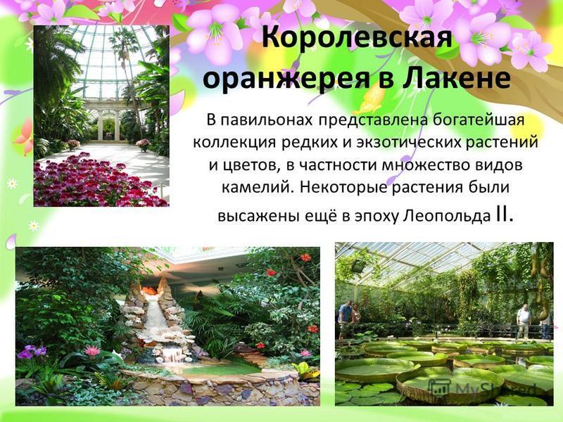 ProPowerPoint.ru Королевская оранжерея в Лакене В павильонах представлена богатейшая коллекция редких и экзотических растений и цветов, в частности множество видов камелий. Некоторые растения были высажены ещё в эпоху Леопольда II.
