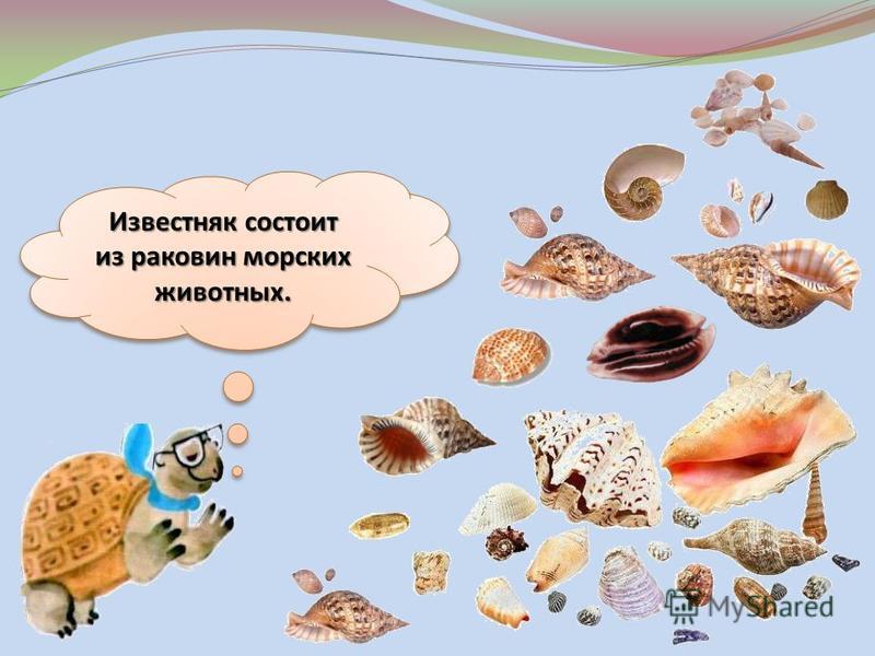 Известняк состоит из раковин морских животных.