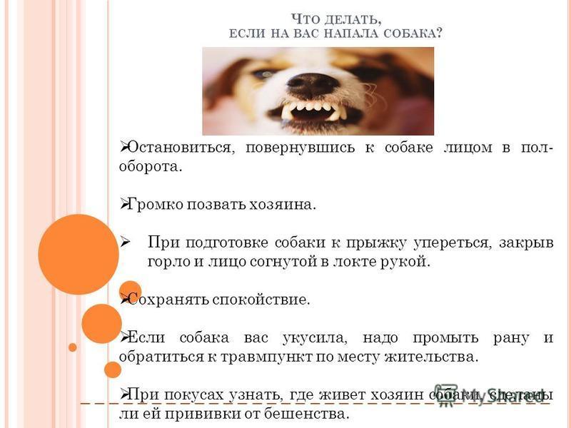 Ч ТО ДЕЛАТЬ, ЕСЛИ НА ВАС НАПАЛА СОБАКА ? Остановиться, повернувшись к собаке лицом в пол- оборота. Громко позвать хозяина. При подготовке собаки к прыжку упереться, закрыв горло и лицо согнутой в локте рукой. Сохранять спокойствие. Если собака вас ук