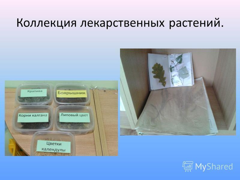 Коллекция лекарственных растений.