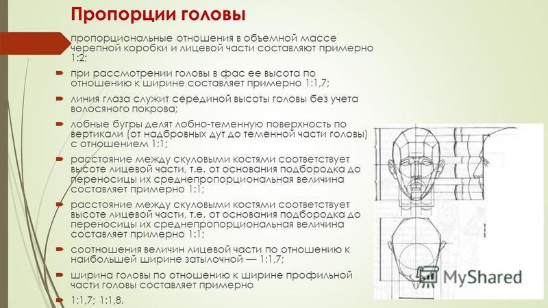 Пропорции головы пропорциональные отношения в объемной массе черепной коробки и лицевой части составляют примерно 1:2; при рассмотрении головы в фас ее высота по отношению к ширине составляет примерно 1:1,7; линия глаза служит серединой высоты головы