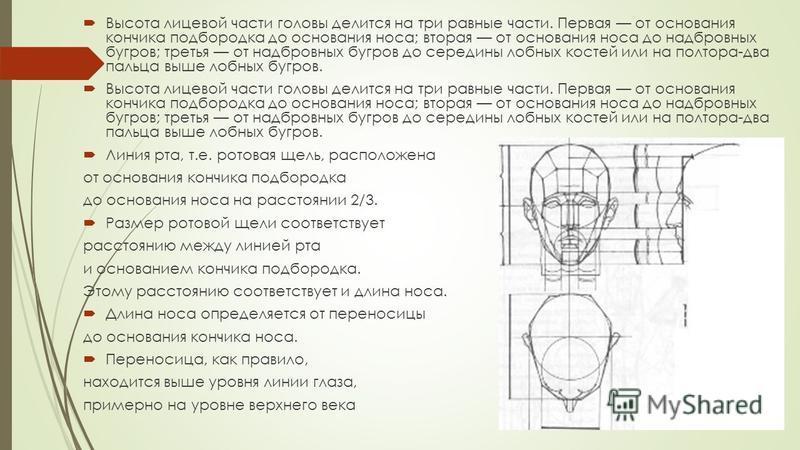 Высота лицевой части головы делится на три равные части. Первая от основания кончика подбородка до основания носа; вторая от основания носа до надбровных бугров; третья от надбровных бугров до середины лобных костей или на полтора-два пальца выше ло