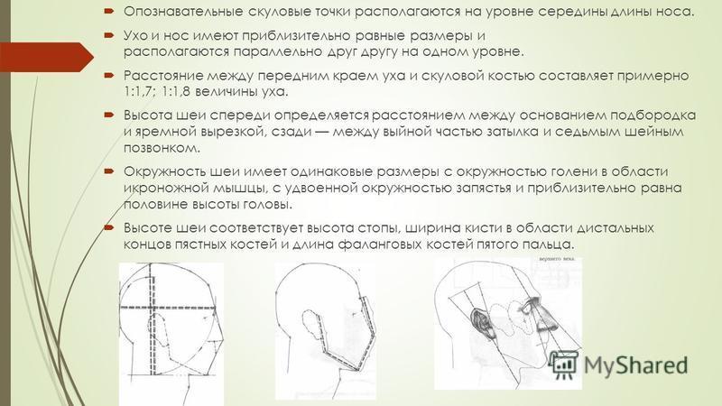 Опознавательные скуловые точки располагаются на уровне середины длины носа. Ухо и нос имеют приблизительно равные размеры и располагаются параллельно друг другу на одном уровне. Расстояние между передним краем уха и скуловой костью составляет примерн