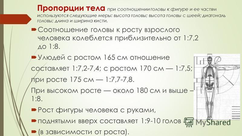 Пропорции тела при соотношении головы к фигуре и ее частям используются следующие меры: высота головы; высота головы с шеей; диагональ головы; длина и ширина кисти. Соотношение головы к росту взрослого человека колеблется приблизительно от 1:7,2 до 1