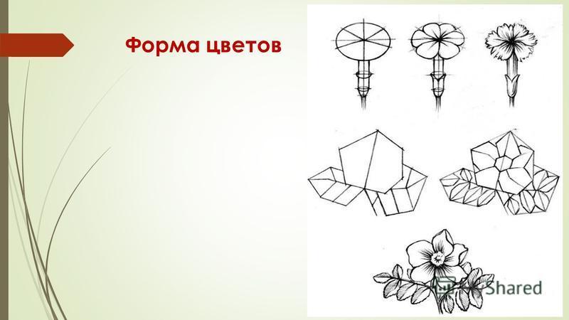 Форма цветов