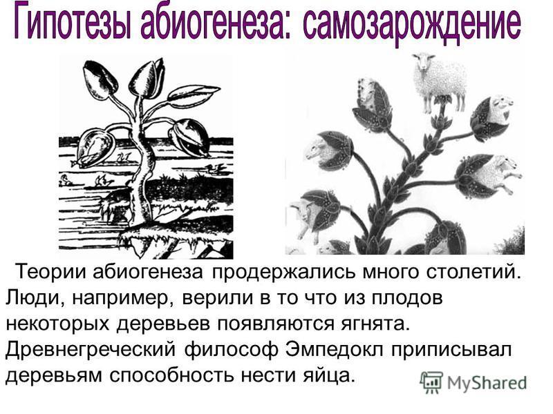 Теории абиогенеза продержались много столетий. Люди, например, верили в то что из плодов некоторых деревьев появляются ягнята. Древнегреческий философ Эмпедокл приписывал деревьям способность нести яйца.
