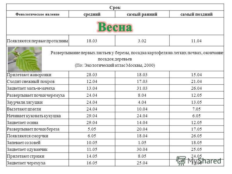 Срок Фенологическое явление средний самый ранний самый поздний Появляются первые проталины 18.033.0211.04 Развертывание первых листьев у березы, посадка картофеля на легких почвах, окончание посадок деревьев (По: Экологический атлас Москвы, 2000) При