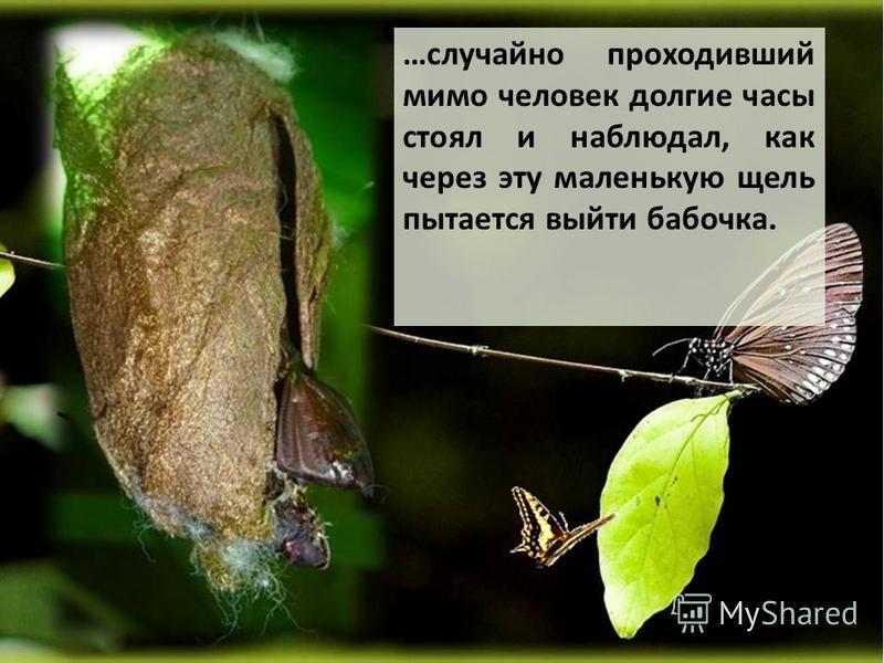 …случайно проходивший мимо человек долгие часы стоял и наблюдал, как через эту маленькую щель пытается выйти бабочка.