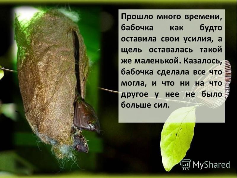 Прошло много времени, бабочка как будто оставила свои усилия, а щель оставалась такой же маленькой. Казалось, бабочка сделала все что могла, и что ни на что другое у нее не было больше сил.