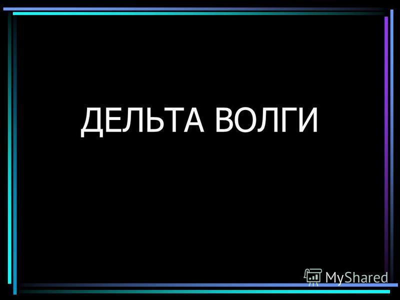 ДЕЛЬТА ВОЛГИ