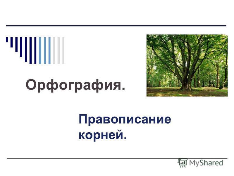 Орфография. Правописание корней.