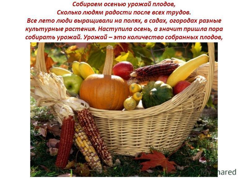 Собираем осенью урожай плодов, Сколько людям радости после всех трудов. Все лето люди выращивали на полях, в садах, огородах разные культурные растения. Наступила осень, а значит пришла пора собирать урожай. Урожай – это количество собранных плодов,