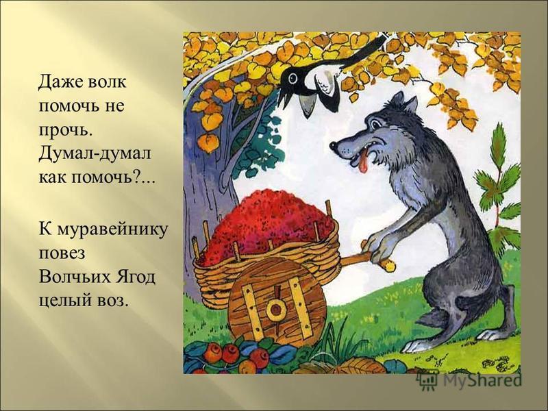 Даже волк помочь не прочь. Думал-думал как помочь?... К муравейнику повез Волчьих Ягод целый воз.