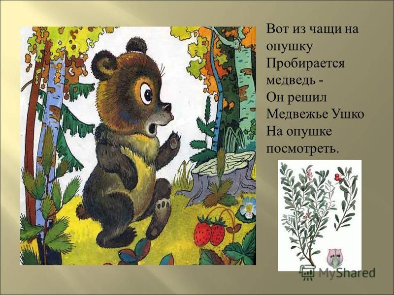 Вот из чащи на опушку Пробирается медведь - Он решил Медвежье Ушко На опушке посмотреть.