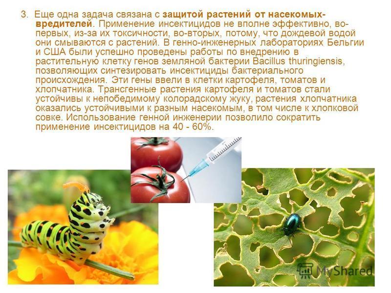 3. Еще одна задача связана с защитой растений от насекомых- вредителей. Применение инсектицидов не вполне эффективно, во- первых, из-за их токсичности, во-вторых, потому, что дождевой водой они смываются с растений. В генно-инженерных лабораториях Бе
