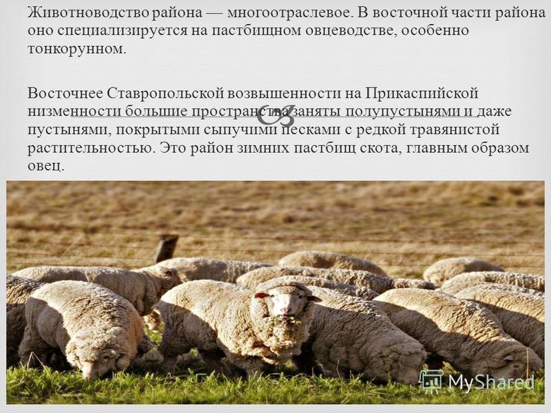 Животноводство района многоотраслевое. В восточной части района оно специализируется на пастбищном овцеводстве, особенно тонкорунном. Восточнее Ставропольской возвышенности на Прикаспийской низменности большие пространства заняты полупустынями и даже