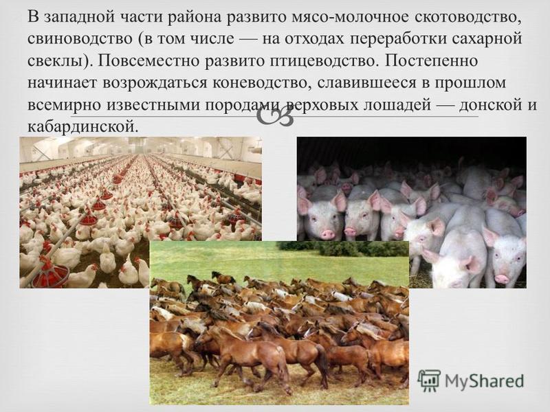 В западной части района развито мясо - молочное скотоводство, свиноводство ( в том числе на отходах переработки сахарной свеклы ). Повсеместно развито птицеводство. Постепенно начинает возрождаться коневодство, славившееся в прошлом всемирно известны