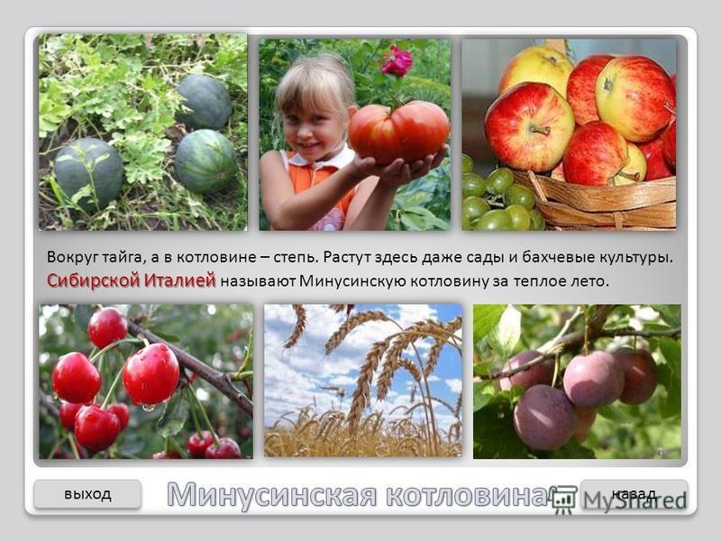 Сибирской Италией Вокруг тайга, а в котловине – степь. Растут здесь даже сады и бахчевые культуры. Сибирской Италией называют Минусинскую котловину за теплое лето. выход назад