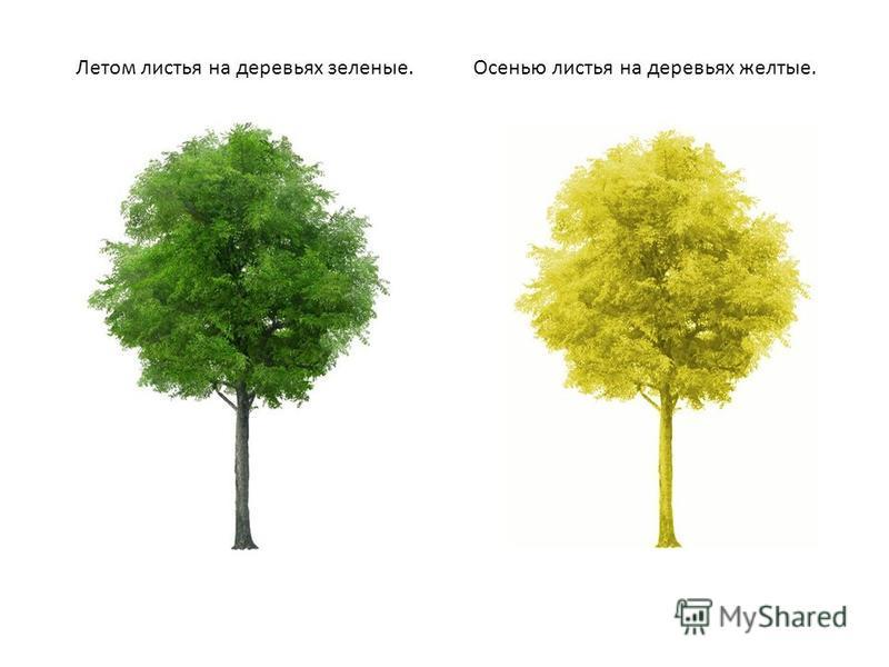 Летом листья на деревьях зеленые.Осенью листья на деревьях желтые.