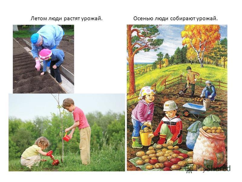 Летом люди растят урожай.Осенью люди собирают урожай.