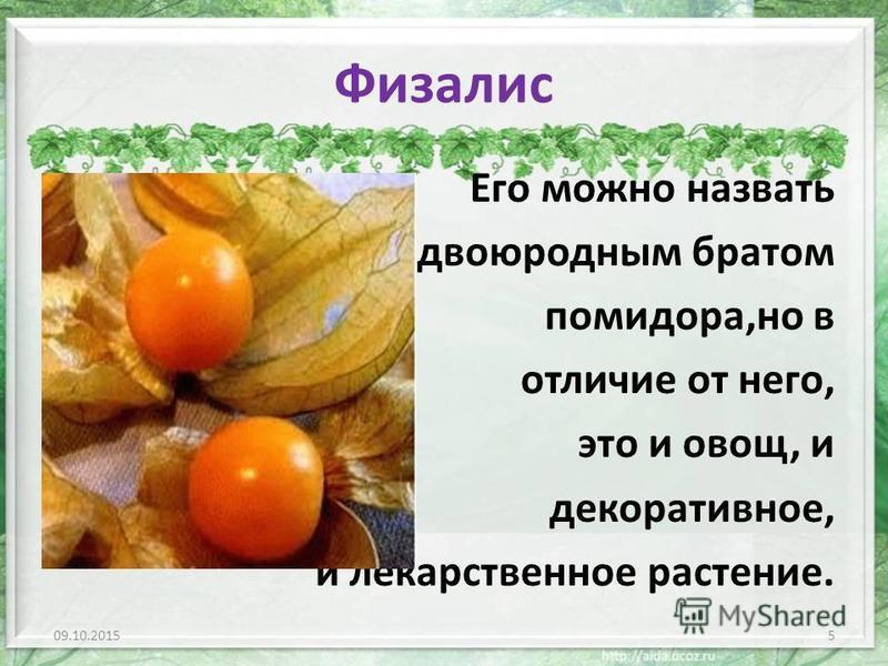 Физалис Его можно назвать двоюродным братом помидора,но в отличие от него, это и овощ, и декоративное, и лекарственное растение. 09.10.20155