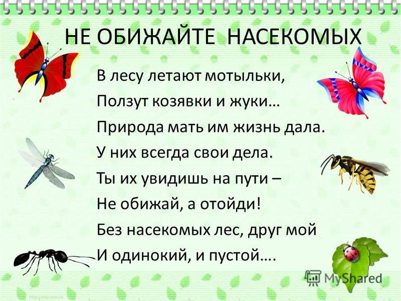НЕ ОБИЖАЙТЕ НАСЕКОМЫХ В лесу летают мотыльки, Ползут козявки и жуки… Природа мать им жизнь дала. У них всегда свои дела. Ты их увидишь на пути – Не обижай, а отойди! Без насекомых лес, друг мой И одинокий, и пустой….