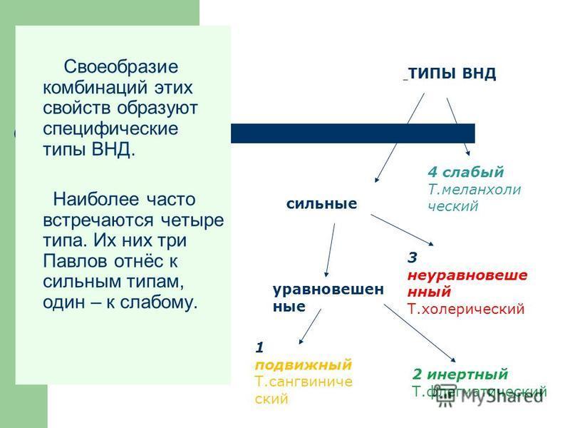 Своеобразие комбинаций этих свойств образуют специфические типы ВНД. Наиболее часто встречаются четыре типа. Их них три Павлов отнёс к сильным типам, один – к слабому. ТИПЫ ВНД сильные 4 слабый Т.меланхолии чешский уравновешенные 3 неуравновешенный Т